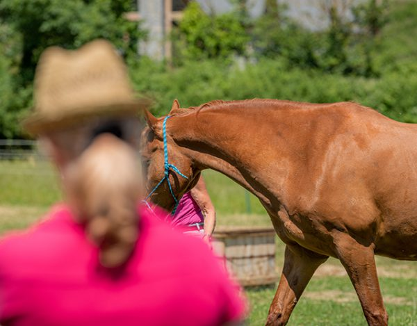 Assessing a horse in a training session