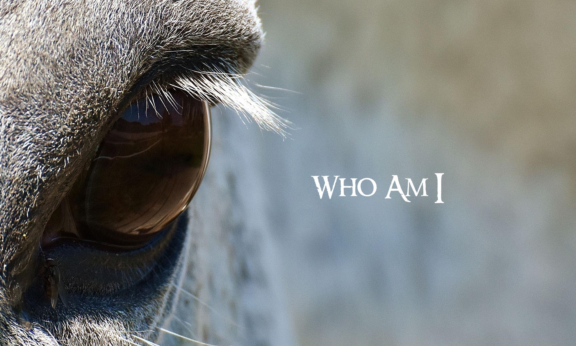 Horse Eye Closeup whith text Who Am I