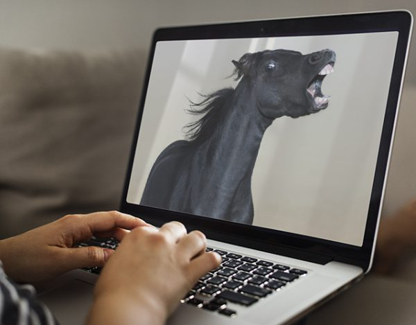 Online Horse Behaviour Consultations